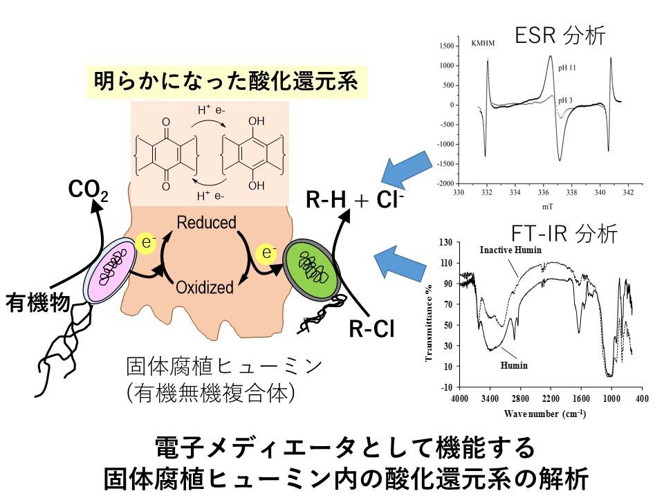電子メディエータとして機能する固体腐植ヒューミン内の参加還元系の解析