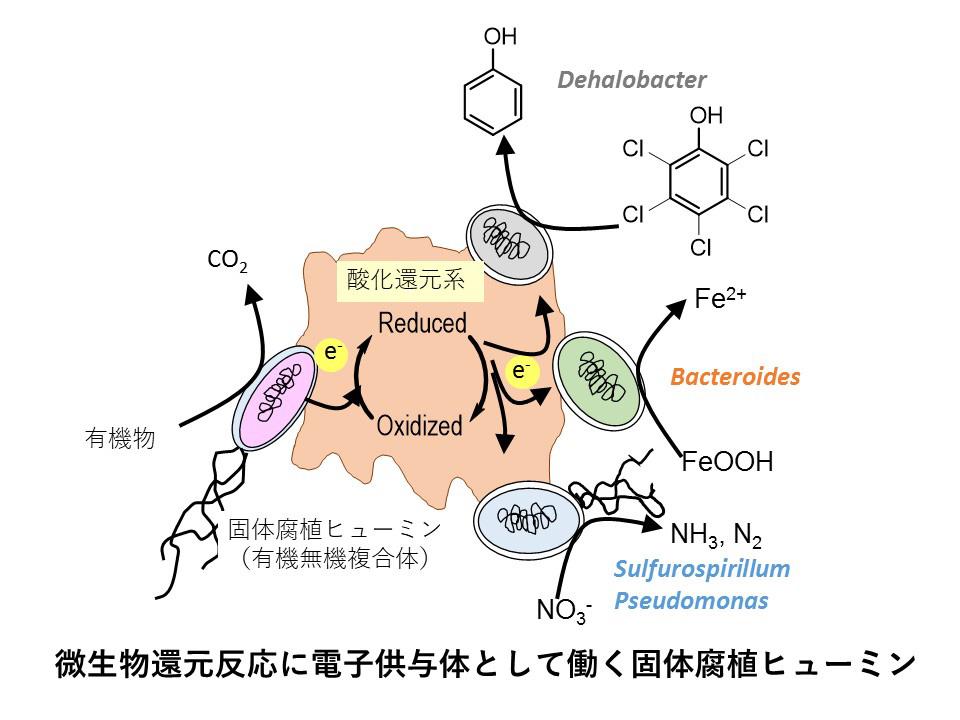 微生物還元反応に電子供与体として働く固体腐植ヒューミン